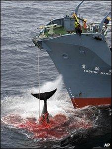 _48014652_whalingap