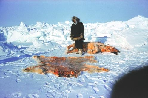 Ban Polar bear hunting for fur ~ Jai Krishna Ponnappan