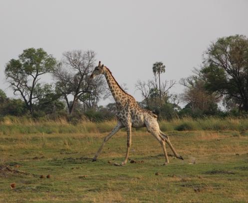 Zimbabwe and Botswana