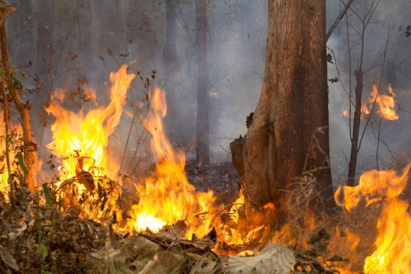Fire-ThailandforestcToa55_shutterstock_273190859