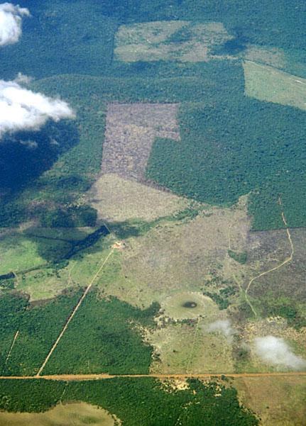 Roaddeforestation