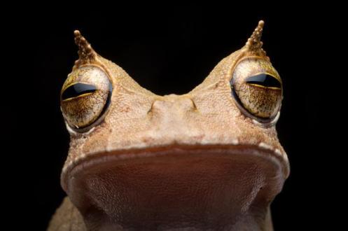 02-frog-rediscovered-ecuador-ah095-03-09.adapt.676.1.jpg