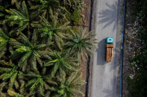 03-frog-rediscovered-ecuador-dji_0330.adapt.676.1.jpg