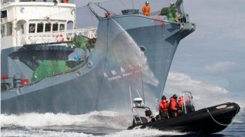 whaling-she-shepherd-water-hose-gary-stokes-ss-635x357.jpg