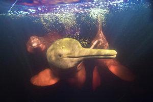 1-amazon-river-dolphins-amazonas-brazil-art-wolfe.jpg