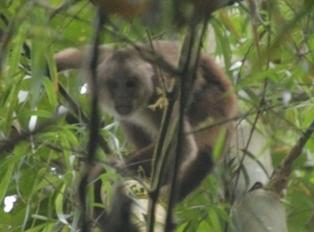 capuchin-in-cana_-_cropped_-_horizontal_01-1